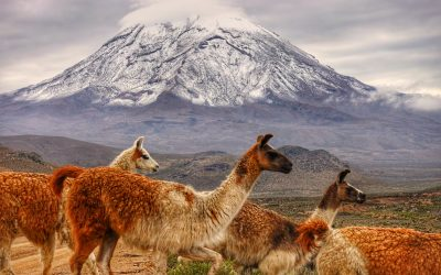 3000km de vol bivouac en Amérique du Sud !